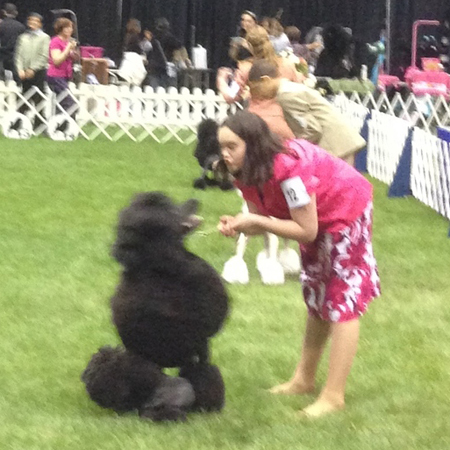 A girl tries to calm her standard poodle
